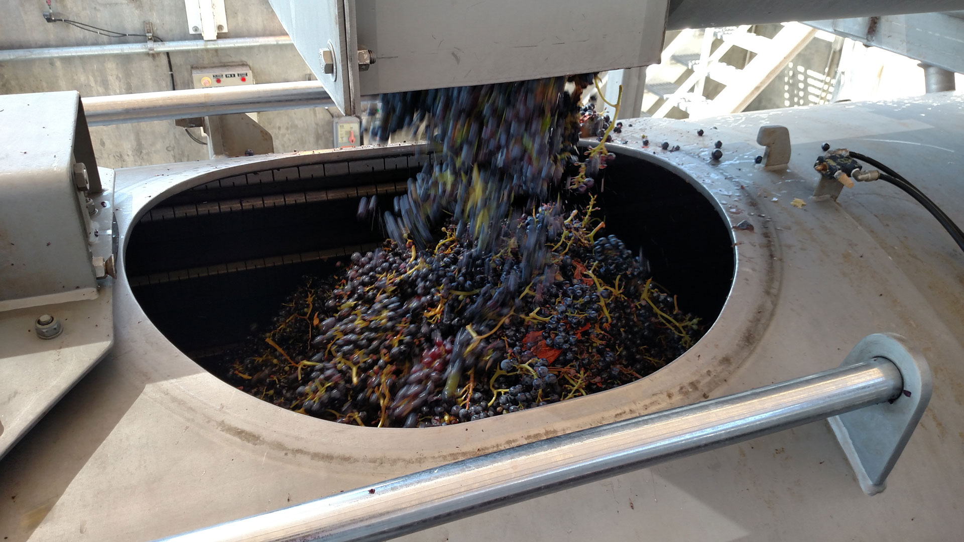 Grapes going into press